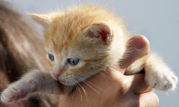 Kissoja ja possuja – Äärioikeisto pehmentää kuvaansa
