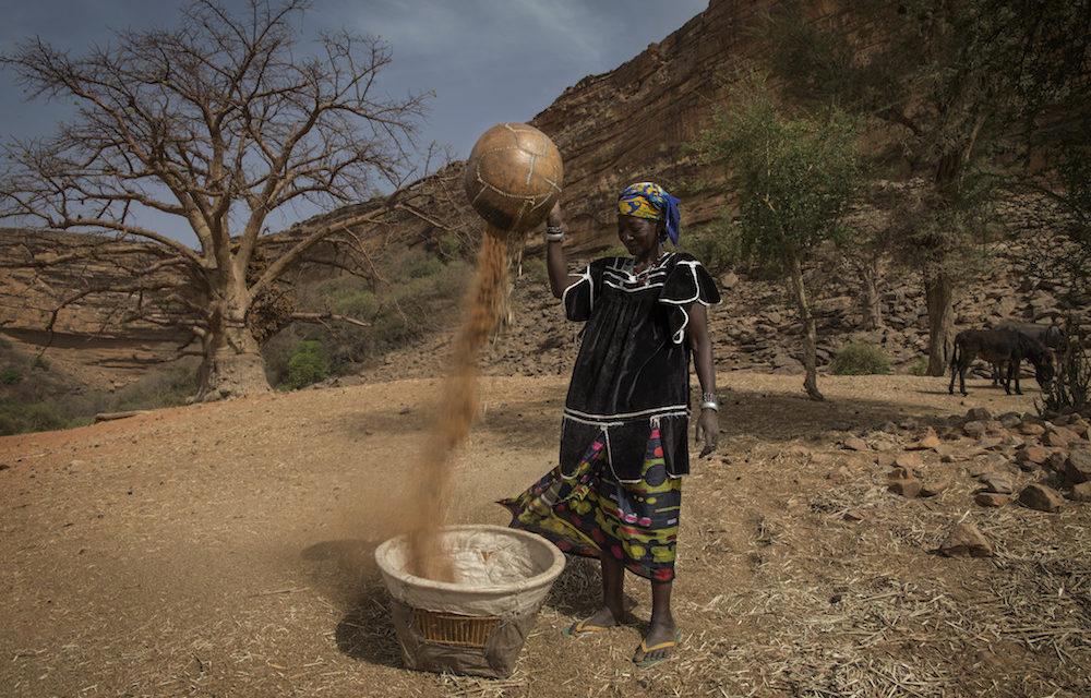 Sahel-sarja, osa II: Siirtomaa-ajan voimasuhteet ja ilmastonmuutos koettelevat Sahelin taloutta