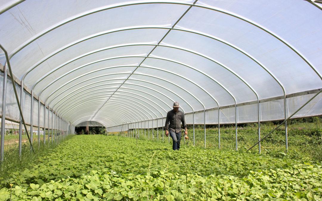 Itäeurooppalaisia kilohintaan – huoli maatalouden kausityöläisistä sivuuttaa keskustelun työehdoista ja Euroopan keskinäisestä tasa-arvosta